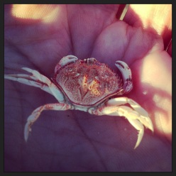 Possibly the cutest little crab in the world